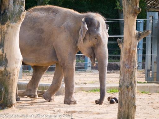 Asian Elephant (Lumix 45-150mm shot at 150mm f/5.6 ISO 320)